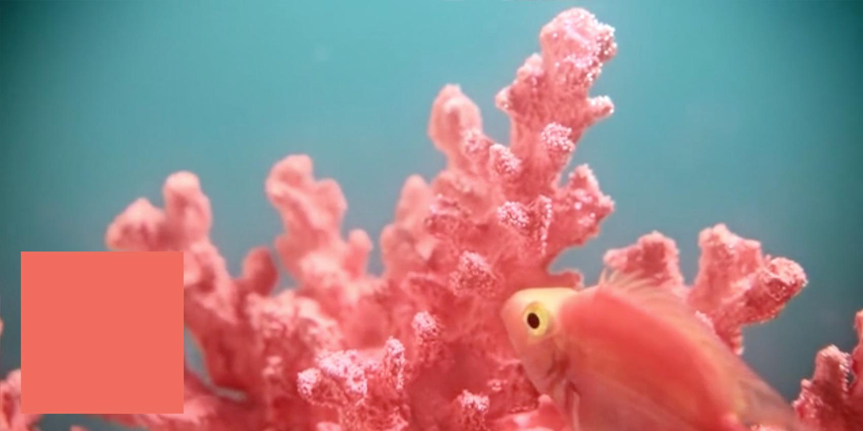 Het echte verhaal achter kleurrijk koraal-[tag] 4|Het echte verhaal achter kleurrijk koraal-[tag]|Het echte verhaal achter kleurrijk koraal-[tag] 1|Het echte verhaal achter kleurrijk koraal-[tag] 2|Het echte verhaal achter kleurrijk koraal-[tag] 3